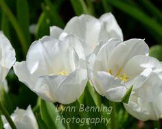 WHITE TULIPS by LBENNINGPHOTO on Etsy, $25.00