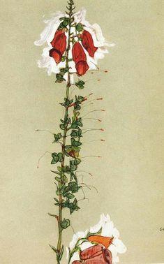 Egon Schiele, red thimble, 1910