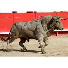 El Toro de casta brava - Google Search