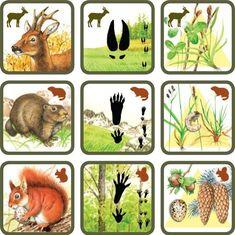 Natuurspel voor kleuters, zoek het dier bij zijn sporen en voedsel no.2, free printable