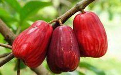 Os 10 Benefícios do Jambo Rosa Para Saúde