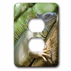 3dRose Costa Rica, Green Iguana lizard - SA22 MWI0026 - Mark Williford, 2 Plug Outlet Cover