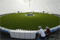 Dome-Shaped Greenhouse, Granpa leads high-tech revolution in farming Indoor Farming, Hydroponic Farming, Fish Farming, Hydroponics System, Hydroponic Growing, Sustainable Farming, Urban Farming, Permaculture, Farming Technology