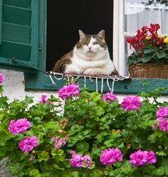 The Fat Cat of Salzburg, Austria