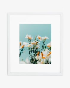Matilija poppies in Oceanside, California Printed on Hahnemuhle Photo Rag 308 Free domestic shipping on all orders Right this way for more details Good Marriage, Flower Aesthetic, Dress Makeup, Find Picture, Decoration, Aesthetic Pictures, Poppies, Images, Tapestry