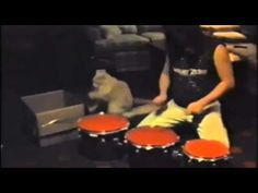 Need a Drummer? This Cat Can Definitely Add Not Only a Beat, But Also Cuteness Overload to your Band! | The Animal Rescue Site Blog