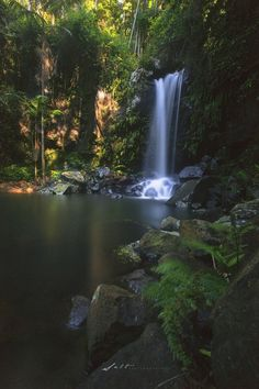 Tamborine Mountain, Tamborine Mountain, Australia - Curtis falls a one very easily hike that is only 500m from the car park. If you love waterfalls this is a must when your visiting the Gold Coast. take along some swimmers and maybe a bottle of wine sit back and enjoy one of mother natures beauty.