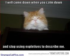 Cat Tries To Calm Down Human Very Cute Kitty Cat Caption Picture - Funny Cats Pictures With Captions