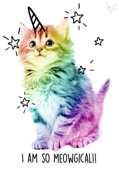 New wallpaper cute cat gatos Ideas Cute Baby Animals, Animals And Pets, Funny Animals, Exotic Animals, Cute Kittens, Cats And Kittens, Crazy Cat Lady, Crazy Cats, Funny Animal Pictures