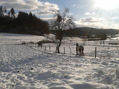 30.12.2014: Winterlandschaft @ Riegersburg