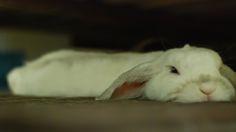 Go-Go the Cute Bunny getting real flatttt.