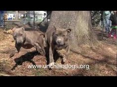 "Coalition to Unchain Dogs - Beast & Queen - now say ""Betcha can't catch me...woof"" Music: ""My Song"" by Brandi Carlile"