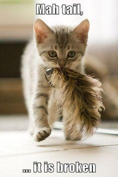 Mah tail, ... it is broken