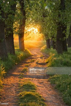 Search from 60 top Forest Path Sunlight pictures and royalty-free images from iStock. Find high-quality stock photos that you won't find anywhere else. Forest Path, Magic Forest, 7 Chakras, Amazing Nature, Nature Photos, Beautiful Landscapes, Royalty Free Images, Sunlight, Bonsai