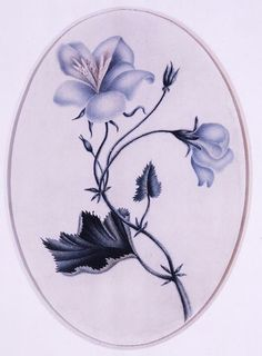 Charlotte's watercolor study of a blue flower painted in 1832, when she was just 16. (courtesy of Bronte Parsonage Museum)