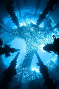 Chris Gug, The Ancient Wharf, The Underwater World Winner, 2011 - repinned for www.CavemenTimes.com
