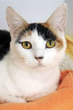 Adopt Julia at Best Friends Animal Sanctuary.........Miss Merlo!!!!