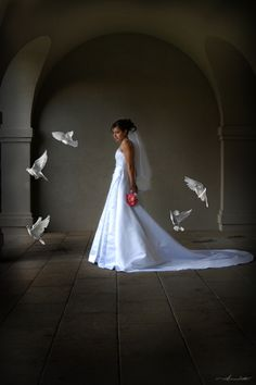 Dove Releases for Weddings from White Wings United Doves