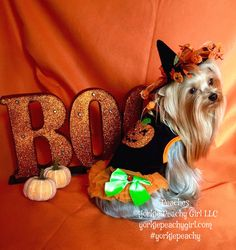 Be-Witchingly cute in a Witchy hat and pumpkin dress. Girls World, Well Dressed, Yorkie, Cute Outfits, Pumpkin, Hats, Dresses, Fashion, Pretty Outfits
