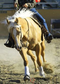 Click the pin to read about to improve your balance at the canter!