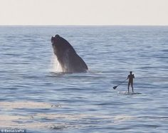 A man so closer to a whale in the wild :O
