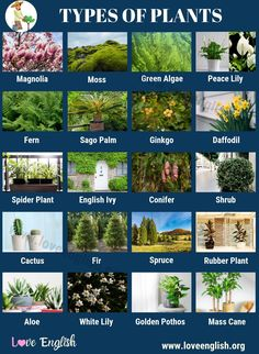 Types of Plants! Below is the list of some types of plants. This interesting list shows only common names of plants because scientific names are very hard to English Time, English Verbs, Learn English Words, English Vocabulary, English Grammar, English Language, English Writing Skills, Learning English, Small Evergreen Shrubs