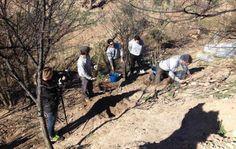 #Yecla, tierra de olmos. La Confederación Hidrográfica del Segura planta los primeros 200 ejemplares para recuperar la rambla de Tobarrilla