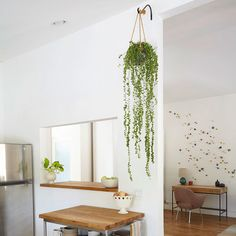 6 Astute Clever Tips: Minimalist Interior Simple Living Rooms minimalist home closet casual.Contemporary Minimalist Interior Simple minimalist home inspiration chairs. Minimalist Home Decor, Minimalist Kitchen, Minimalist Interior, Minimalist Living, Minimalist Bedroom, Modern Minimalist, Hang Plants From Ceiling, Hanging Plants, Potted Plants
