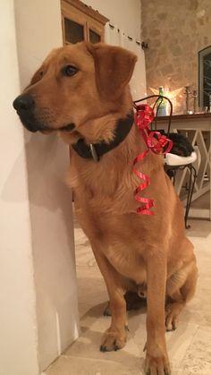 1er Noël