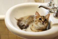 could you turn the water on? i want to take a bath!