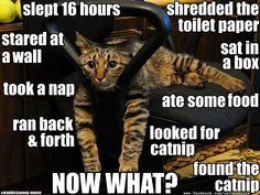 I've had many cats with this particular problem.  :)  I love kitties.