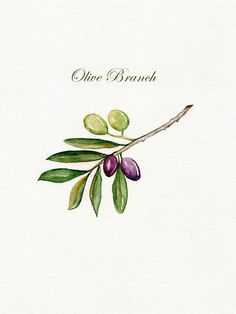 Olive Branch / Olives / Green /  Purple / Leaves / Branch / Archival Watercolor Print