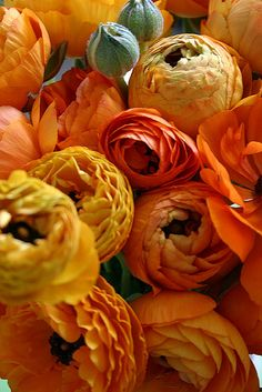 ranunculus in orange, my super ultimate favorite flower. It's so thick with these paper thin petals. Colorful Roses, Orange Flowers, My Flower, Orange Color, Beautiful Flowers, Flower Names, Orange Yellow, Fall Flowers, Beautiful Beautiful
