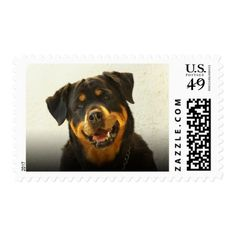 #Rottweiler Dog Postage - #rottweiler #puppy #rottweilers #dog #dogs #pet #pets #cute