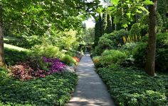 gardens from israel images | flowers, garden, road, Israel, Bahai garden, options menu, Haifa, moss ...