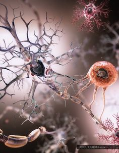 Immune response in the human brain accurately measured for the first time ever. Immune response in the human brain accurately measured for the first time ever. Brain Anatomy, Medical Anatomy, Anatomy Art, Anatomy And Physiology, Human Anatomy, Anatomy Drawing, Brain Art, Brain Science, Science Art