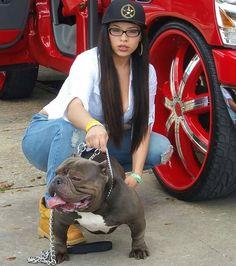 #americanbully_ #americanbully #bullybreed #bullyz #badass #dogs #animals #pitbull #pitsofinstagram #instadog #strong #beast #bodybuilding #beastmode #love #passion #instagram #fitness #ink #mma #perro #cachorro #nature #tattoosofinstagram #bully by americanbully_