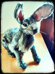 * Hansa hare for Xmas! (B)