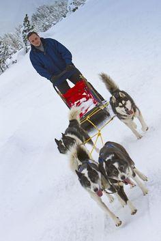 Husky Workshop für jedermann. Hundeschlitten selber fahren Erlebe die Faszination Huskys ohne nach Alaska zu fahren. F&uumlr Firmen, Gruppen und Privatpersonen organisiern wir dein unvergessliches Outdorrabenteuer. Mehr