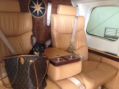 chihuahua takes flight in our Bell 430 luxury helicopter