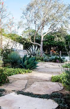 Stone path in a drought-friendly garden