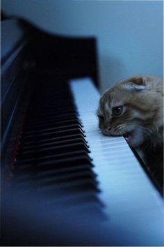 Maybe he's not a fan of music!