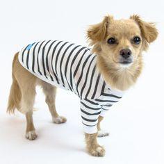 Contents Main Fabric: Rayon, Polyester, SpandexTrim Fabric: Modal Washing Instructions: hand wash recommendedgentle machine wash < Size Chart > ** XS** back: 8 - neck: 7 - girth 11 - S ** back: 10 - neck 8 - girth - M ** back: 11 - neck - girth Dog Hoodie, Dog Shirt, Poodle Grooming, Dog Jacket, Cute Toys, Fall Sweaters, Dog Coats, Dog Bandana, Dog Design