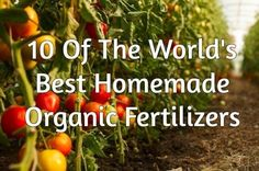 When it comes to organic gardening, the options for all-natural fertilizers can often be scarce on the shelves at your average supply store. Those that do exist are more expensive and while they may … Organic Fertilizer For Vegetables, Tomato Fertilizer, Tomato Farming, Organic Gardening Tips, Vegetable Gardening, Tomato Pruning, Garden Fertilizers, Organic Pesticides, Gardening Hacks