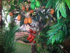 La piantagione di cacao #ClusterCacao #CostadAvorio #Expo2015