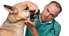 Proper Dog Dental Care Read more in: http://lovablepawsandclaws.com/
