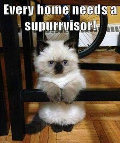 dacc4ef7615644f1bddc13dfba05ec5c thats it! no more mr nice guy! cat memes pinterest cat, cat,Chronic Illness Cat Meme