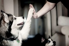 high five, you're the cutest thing alive.