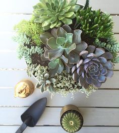 And the view from above my succulent planter garden. Pretty proud of my first time efforts 💪🏼 House And Home Magazine, Garden Planters, Succulents, Pretty, Instagram Posts, Plants, Deck, Outdoors, Flower Planters