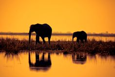 Sunset Reflection of Chobe by Mario Moreno via @photographyweek